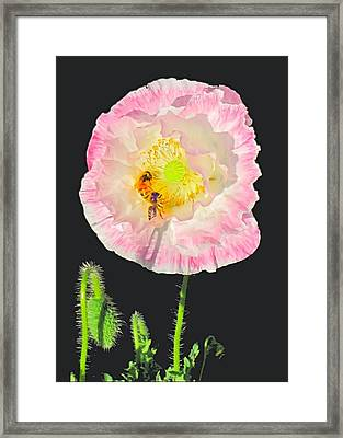 Bee Friendly Framed Print by Myrna Migala