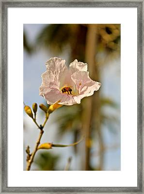 Bee In Paradise Framed Print by Felix Zapata