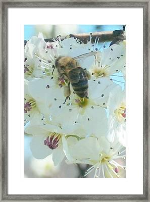 Bee Nice Framed Print by Wide Awake Arts