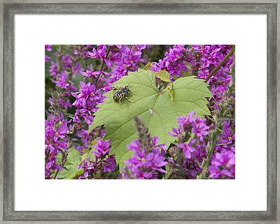 Bee On A Leaf Framed Print by Michel DesRoches