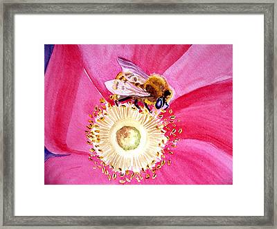 Bee On A Top Framed Print by Irina Sztukowski
