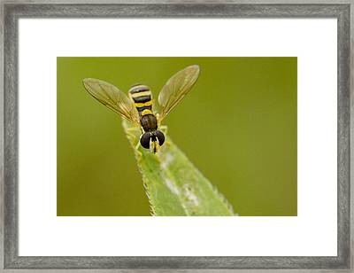 Bee On Belief  Framed Print by Dean Bennett