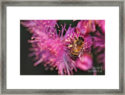 Bee On Lollypop Blossom Framed Print by Kaye Menner