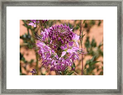 Bee Plant Framed Print