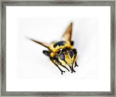 Bee Framed Print by Susan Leggett