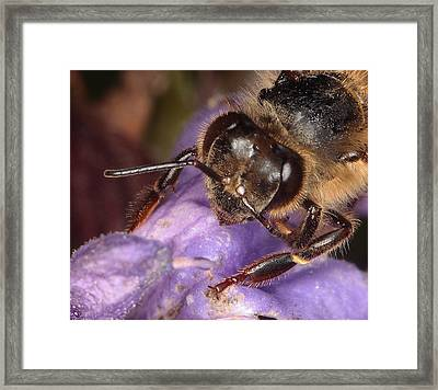 Framed Print featuring the photograph Bee Up Close And Personal by Charles Dana