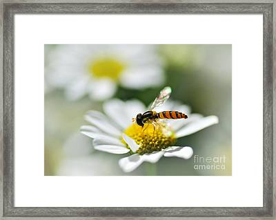 Bee With Rainbow Wings Framed Print by Kaye Menner