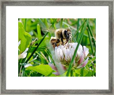 Beeautiful Framed Print by Katie Bauer