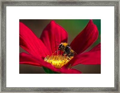 Framed Print featuring the photograph Beebot by Stwayne Keubrick