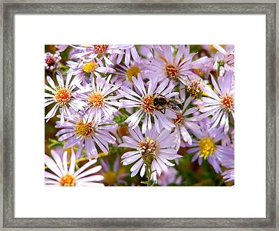 Beeflowers Framed Print