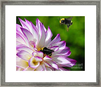 Framed Print featuring the photograph Bees N Blooms by Jack Moskovita