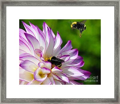Bees N Blooms Framed Print by Jack Moskovita