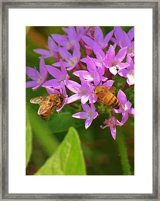 Framed Print featuring the photograph Bees One by Craig Wood