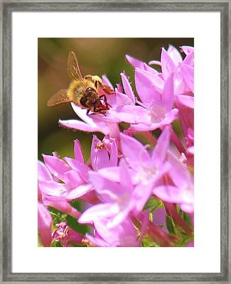 Bees Two Framed Print by Craig Wood