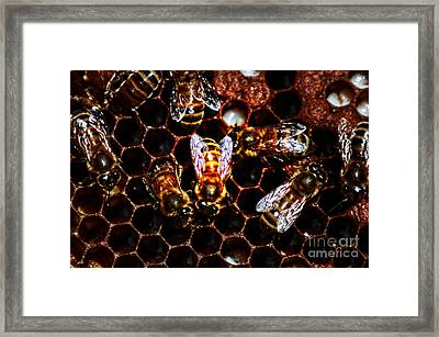 Bee's Work Framed Print by David Taylor