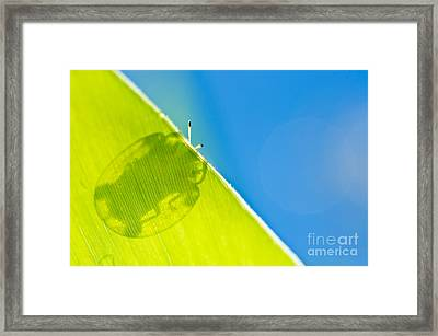 Beetle And Blue Sky Framed Print by Peerasith Chaisanit