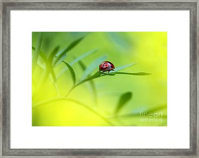 Beetle Butt Framed Print