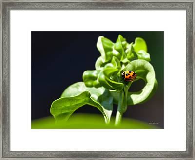 Beetle Of Our Lady Framed Print by Michelle Wiarda