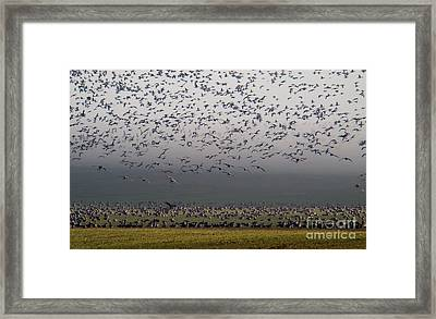 Before The Long Journey North Framed Print