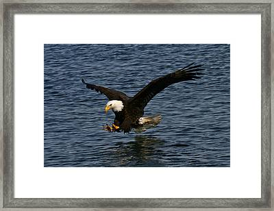 Framed Print featuring the photograph Before The Strike by Doug Lloyd