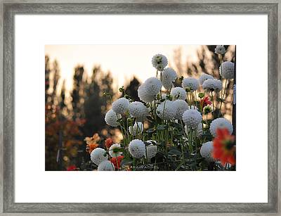 Beginning Of Autumn Framed Print by Sarai Rachel