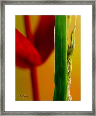 Beginning To Grow Framed Print