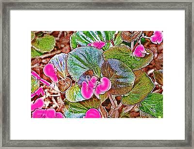 Begonia Framed Print by EricaMaxine  Price