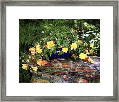 Begonia Framed Print by Tammy Wetzel