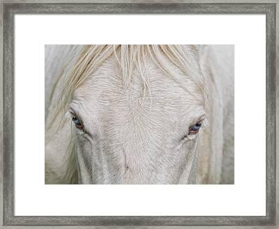 Behind Blue Eyes Framed Print by Heather  Rivet