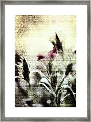 Behind The Garden Gate Framed Print by Bonnie Bruno