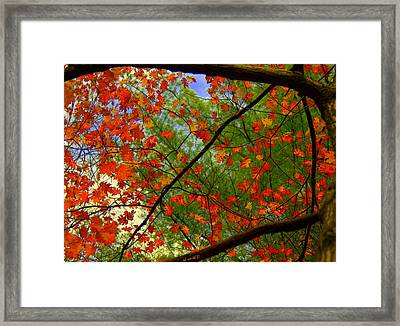 Behind The Green Framed Print