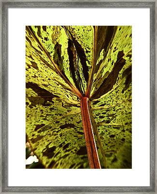 Behind The Leaves Framed Print by Joe Carini