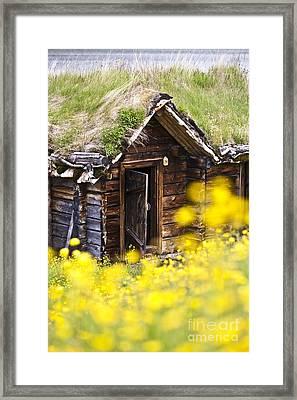 Behind Yellow Flowers Framed Print by Heiko Koehrer-Wagner