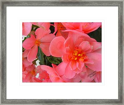 Framed Print featuring the photograph Behold My Beauty by Frank Wickham