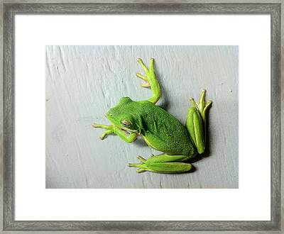 Being Green Framed Print by Dan Wells