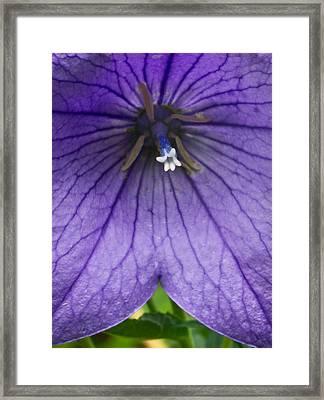 Bell Flower Upclose Framed Print by Douglas Barnett