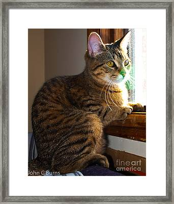 Framed Print featuring the photograph Bella At Rest by John Burns