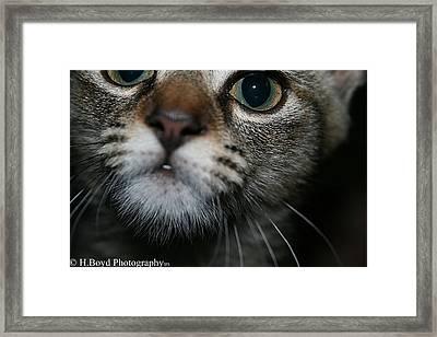 Bella Framed Print by Heather  Boyd