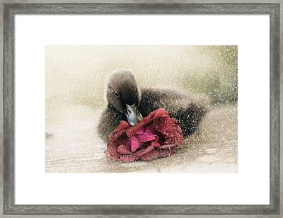 Bella In The Snow Framed Print by Amy Tyler