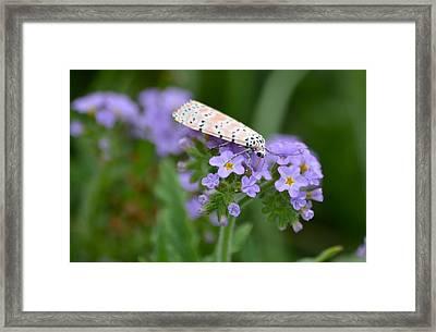 Bella Moth Framed Print by Kathy Gibbons