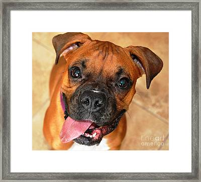 Bella The Beautiful II Framed Print