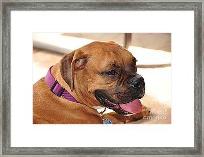 Bella The Beautiful IIi Framed Print