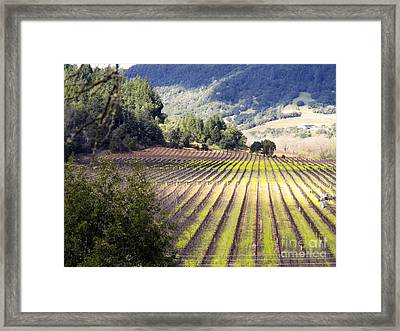 Framed Print featuring the photograph Bella Vineyards by Leslie Hunziker