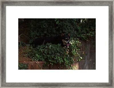 Belle Framed Print by Linda Hutchins