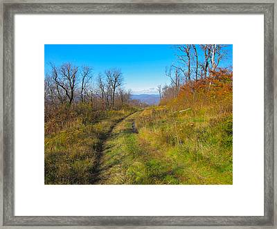 Belleayre Trail In Late Fall Framed Print