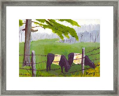 Belted Galloway Cow Painting Rockport Maine Framed Print by Keith Webber Jr
