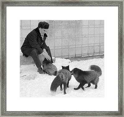 Belyaev With His Selectively Bred Foxes Framed Print by Ria Novosti