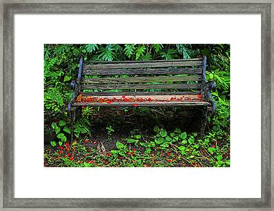 Framed Print featuring the photograph Bench And Flowers- St Lucia. by Chester Williams