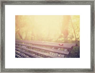 Bench In Autumn Sun Framed Print