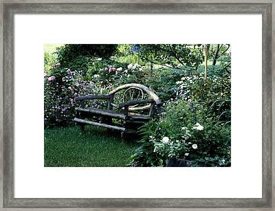 Bench In Garden Framed Print by David Chapman